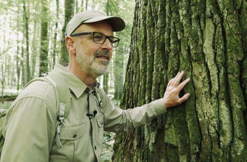 Peter Wohlleben erklärt den Wald