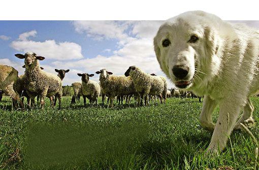 Hundegebell gegen Wolfsgefahr
