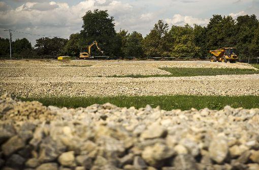 Die vom Regierungspräsidium vorgeschlagene Lösung für umzusiedelnde Eidechsen sorgt für Verärgerung bei Nachbarn der Wiese am Killesberg. Foto: Lichtgut/Leif Piechowski