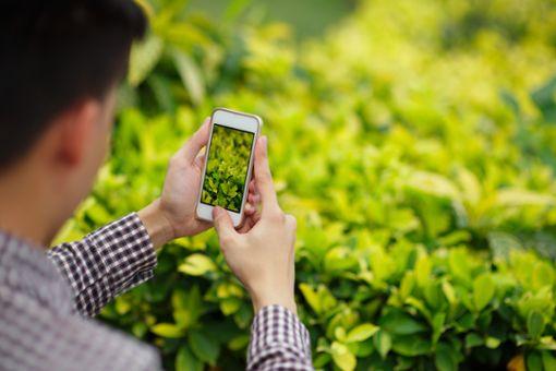 Vorschaubild zum Artikel Pflanzen bestimmen mit App