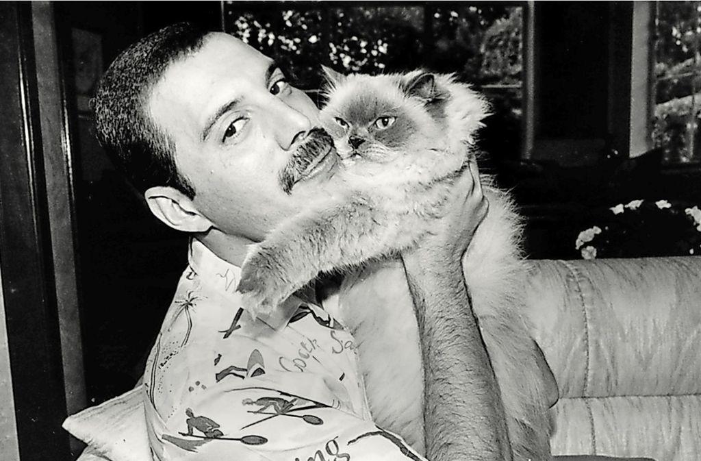 Der legendäre Sänger Freddie Mercury: Millionen Fans hätten gerne mit dieser Katze getauscht Foto: ARTE