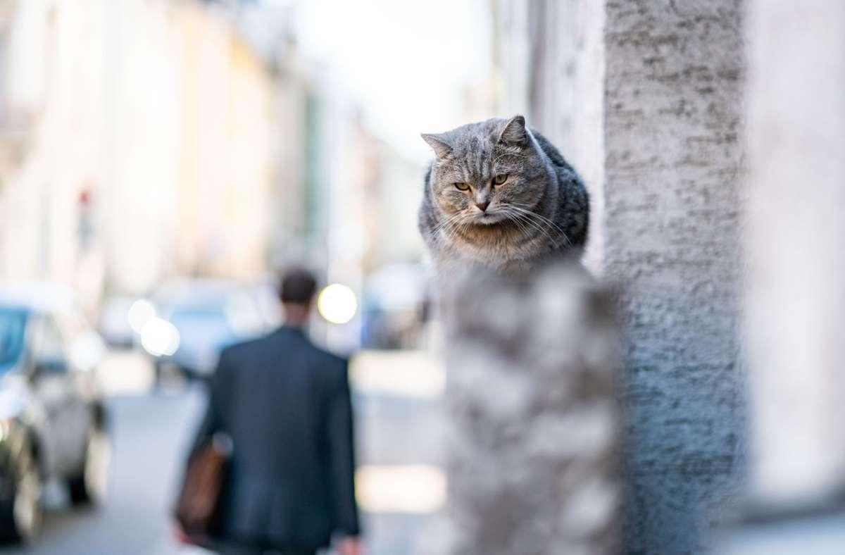 Katzen liegen gerne auf der Lauer nach Vögeln und anderen Tieren. Nicht allen Besitzern ist das recht. Foto: dpa/Frank Rumpenhorst