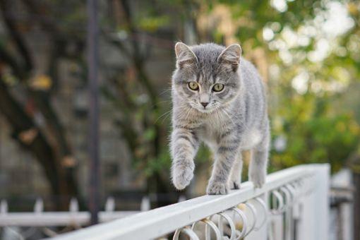 Was tun, wenn die Katze weggelaufen ist?