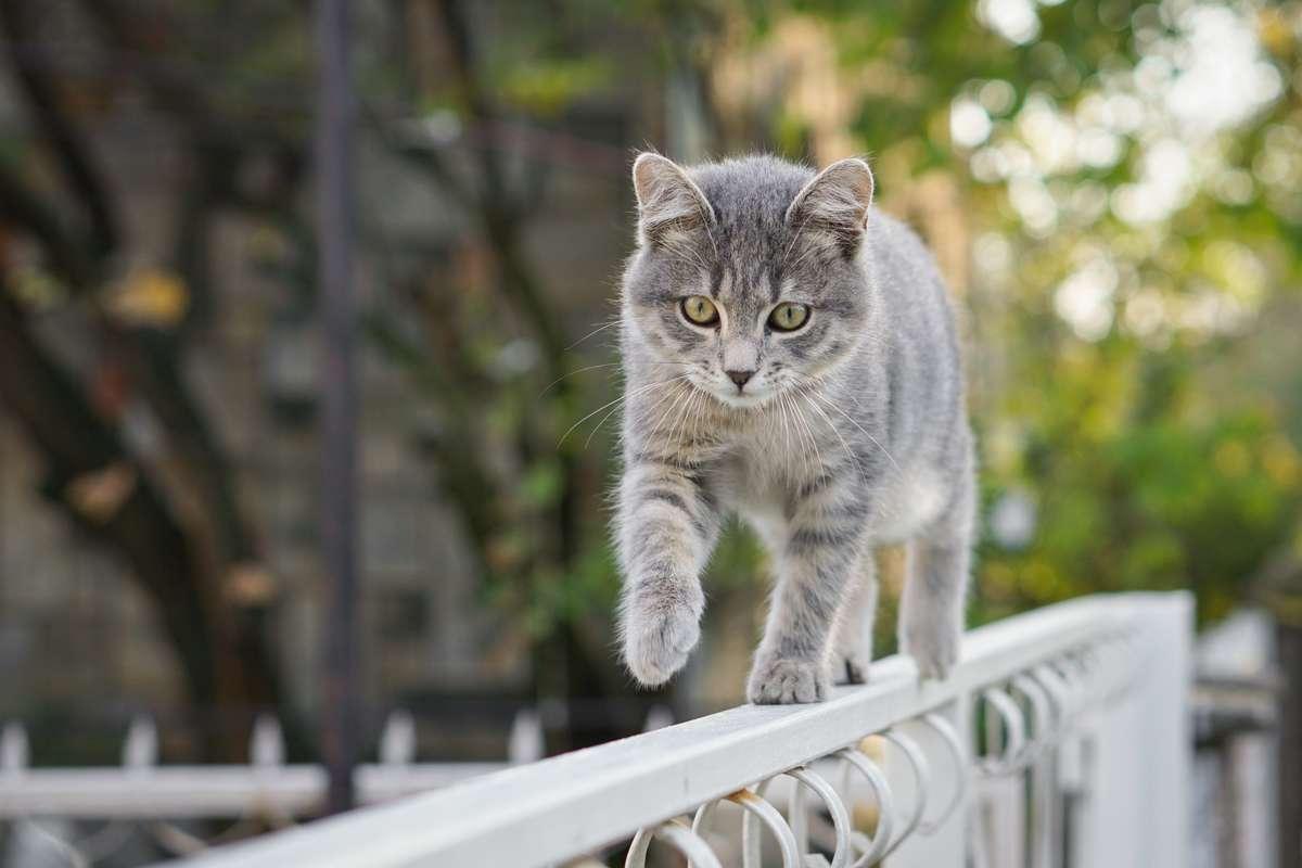 Was tun, wenn die Katze weggelaufen ist? Foto: Zoran Kompar Photography/Shutterstock
