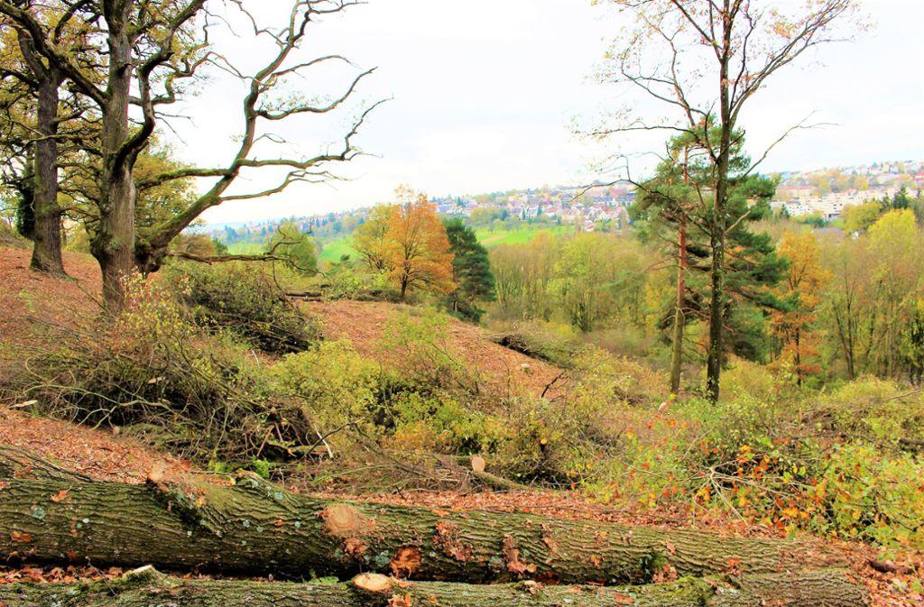 Der Eichenhain ist beliebt: als Erholungsgebiet aber auch bei spielenden Kindern und Familien. Foto: Caroline Holowiecki