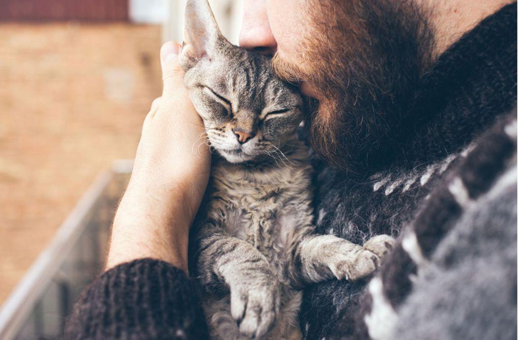 Mit Katzen zu schmusen, kann sehr entspannend sein. (Symbolbild) Foto: Shutterstock