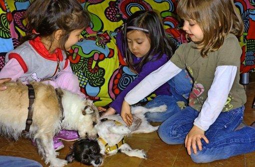 In Göppingen ahben die SOS-Kinder- und Jugendhilfen gute Erfahrungen mit tiergestützter Pädagogik gemacht. Es soll diese auch in der neuen Kita am Fasanenhof geben. Foto: privat