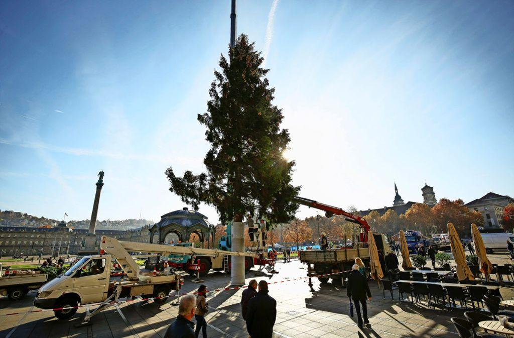 Dem Baum sind die Strapazen des Transports anzusehen. Foto: Lichtgut/Leif Piechowski