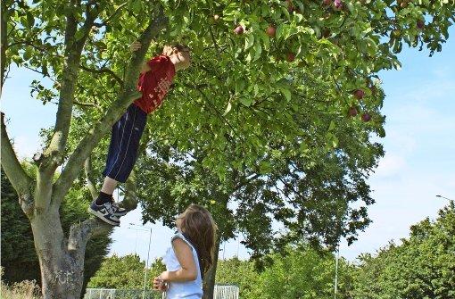 Apfelernte im Asphaltdschungel