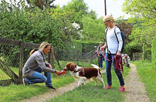 Hunde lernen, professionell zu riechen