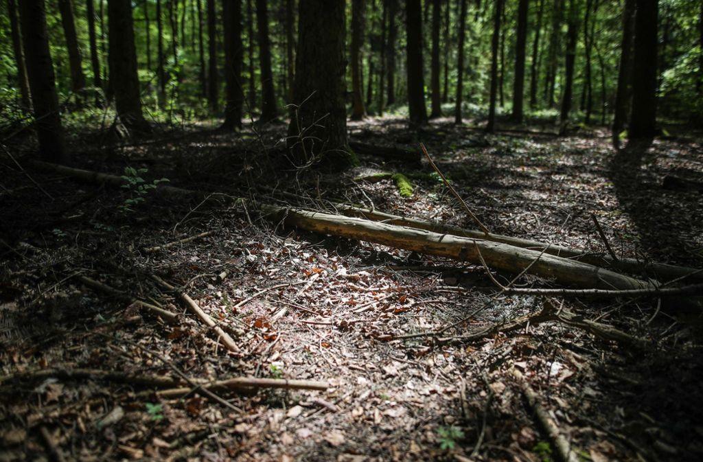 In einem Wald bei Tettnang fand ein Spaziergänger den Dreijährigen zufällig (Symbolbild). Foto: dpa/Christoph Schmidt