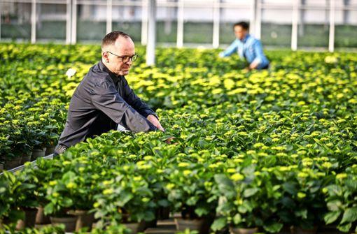 Öffnung kommt für Gärtner genau   rechtzeitig