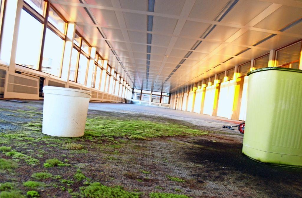 In manchen Gebäuden auf dem Eiermann-Campus im Westen Vaihingens wächst bereits Moos auf dem Teppich. Foto: Archiv R. Ott