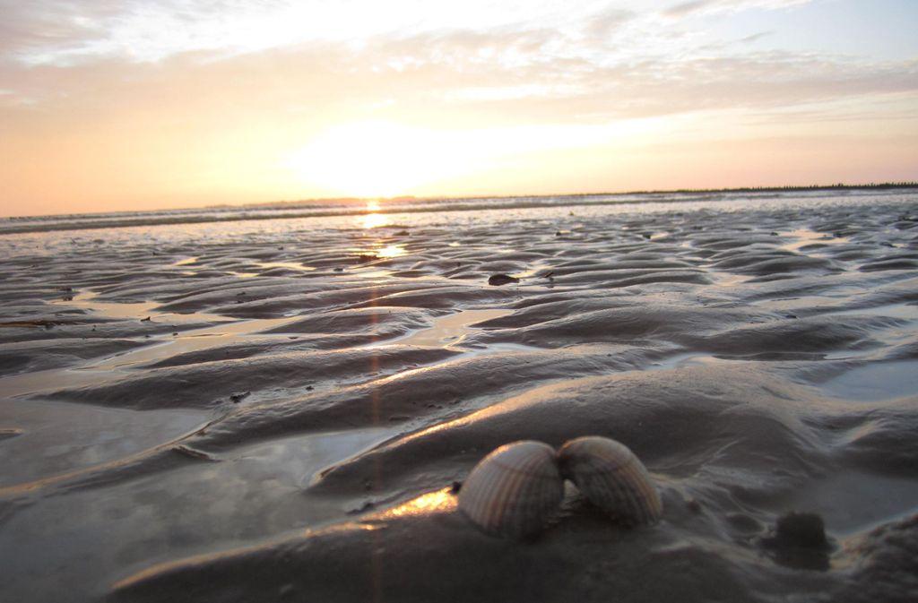 Muscheln im Sonnenuntergang  Foto: Die Nordsee GmbH, Jantje Olchers