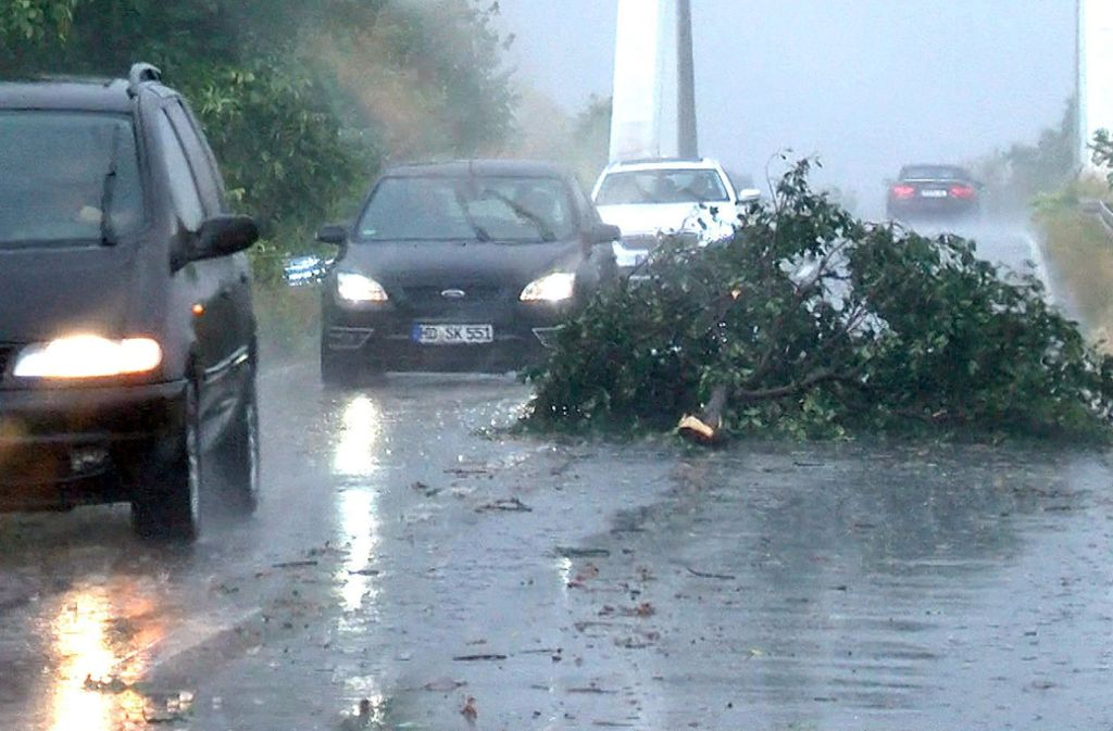 Bei Eppelheim stürzte am Donnerstag ein Baum auf die Straße. Foto: dpa