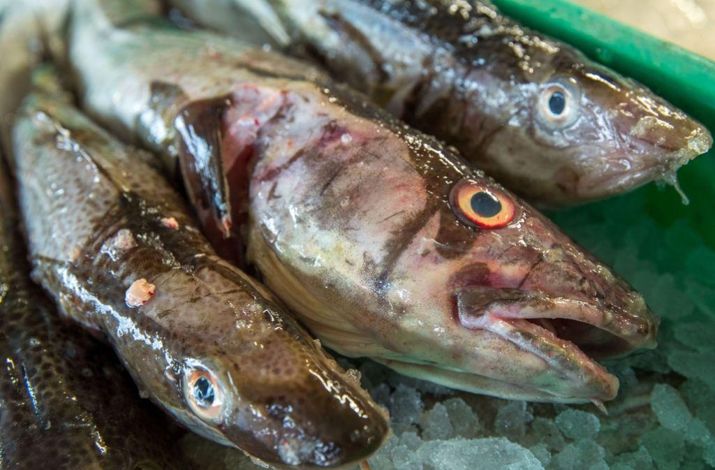 viel Fisch Login-Seite