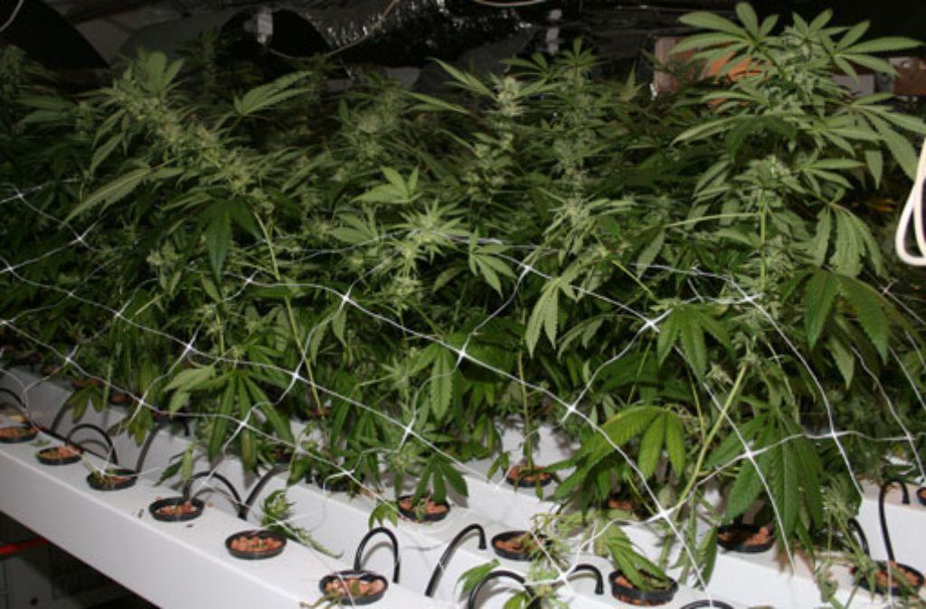 Bei einer Wohnungsdurchsuchung in Asperg stößt die Polizei auf eine professionell aufgezogene Cannabis-Plantage. Foto: Polizei Ludwigsburg