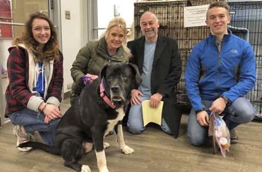 Traurige Riesendogge Polina findet neue Heimat
