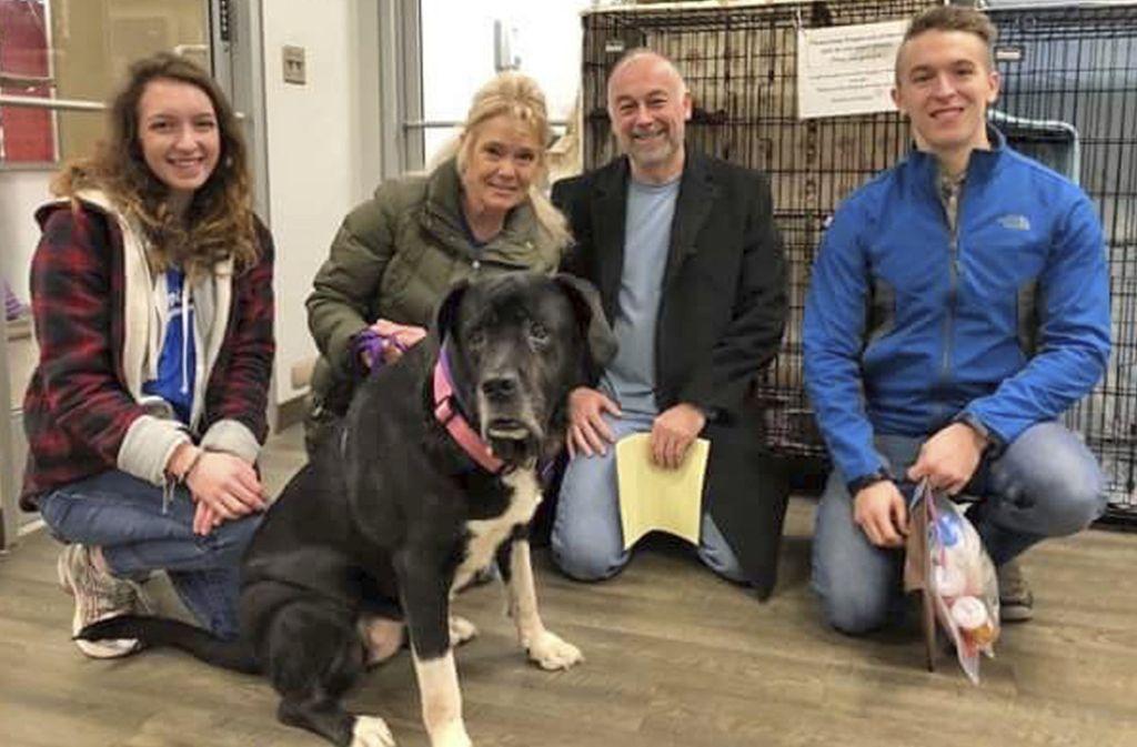 Diese Riesendogge hat die Menschen gerührt. Foto: KC Pet Project