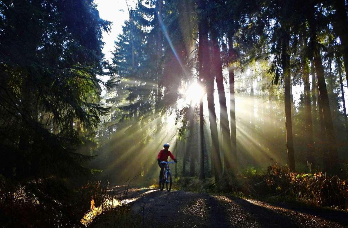 In Baden-Württemberg dürfen Radfahrer im Wald eigentlich nur auf Wegen unterwegs sein, die zwei Meter breit sind. Ausnahmen bestätigen die Regel. Foto: dpa/Arno Burgi