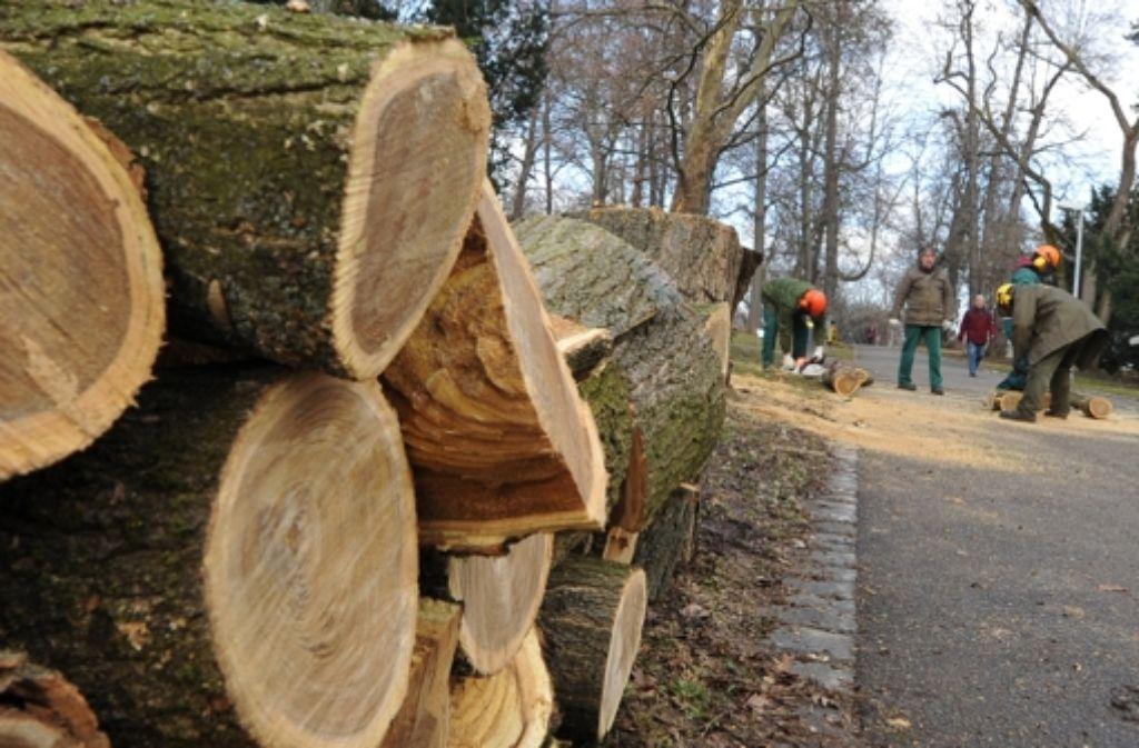 Objekt der Diskussion: die gefällten S-21-Bäume Foto: dpa