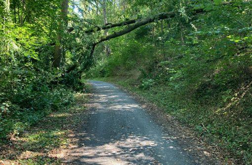 Am Radweg fallen Bäume