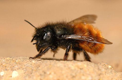 Die kleine Biene aus dem Rollladen-Stopper