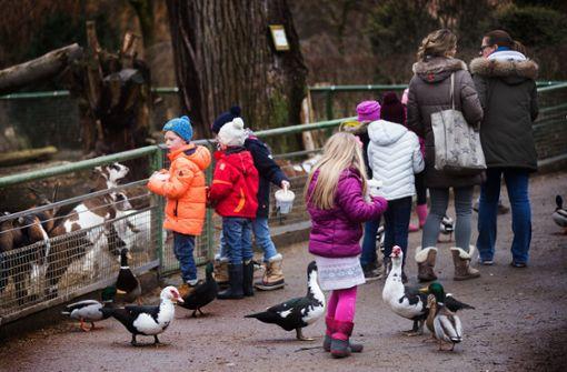 Die Parkplätze vor dem Tierpark sind hart umkämpft