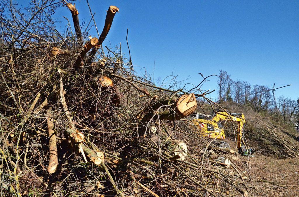Zahlreiche Bäume und Sträucher an den Böschungen fielen der Säge zum Opfer. Foto: Sandra Hintermayr