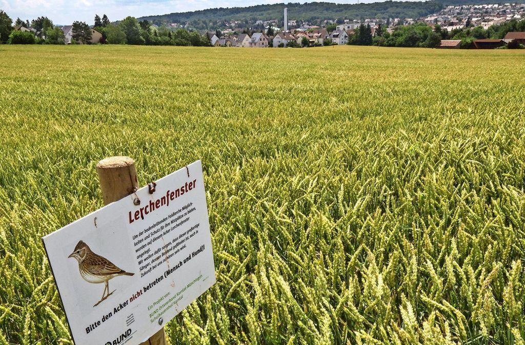 Heute Ackerland, bald Wohnraum für gut 1000 Menschen: das Baugebiet Korntal-West. Foto: factum/