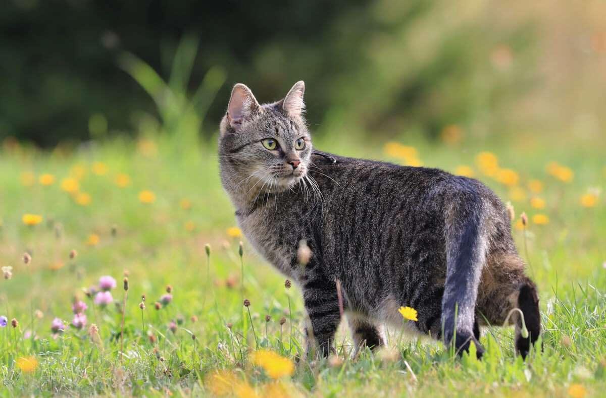 Erfahren Sie, wie Sie Katzen effektiv vertreiben und dauerhaft von Ihrem Garten fernhalten. Die wirksamsten Tipps im Überblick.  Foto: Monika Surzin / Shutterstock.com