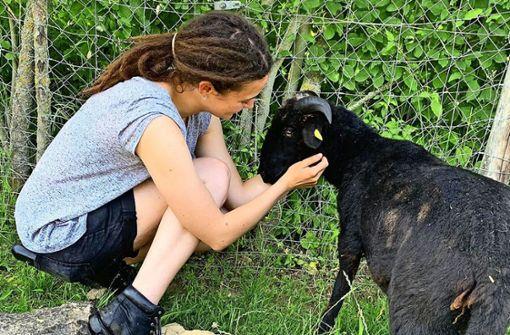Nach Schafschlachtung: Technik schützt nun die Tiere