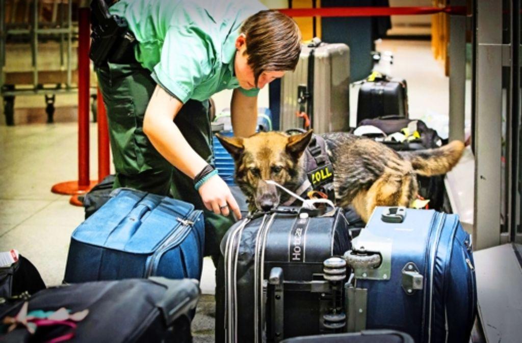 Die Suchhündin Twenty spürt Drogen im Reisegepäck auf. Foto: Achim Zweygarth