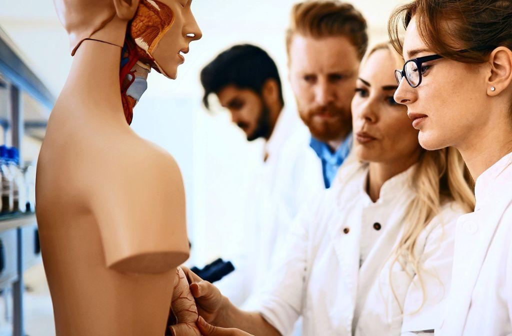 Auch an Modellen lässt sich die menschliche Anatomie studieren. Doch manche Erfahrungen können Medizinstudenten nur durch die Arbeit an Leichen machen. Foto: nd3000 - stock.adobe.com