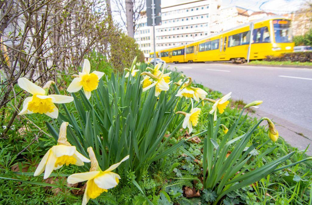 Die Stadtbahnen fahren von Dienstag, 24. März, an nicht mehr nach dem Werktagsfahrplan – eine Folge der Corona-Krise. Foto: 7aktuell.de/Moritz Bassermann