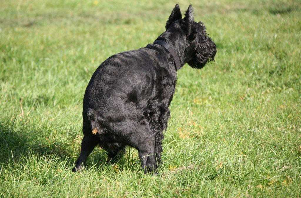 Unschön, aber es gehört dazu: Hundebesitzer müssen die Häufchen ihrer Tiere aufsammeln. Foto: dpa