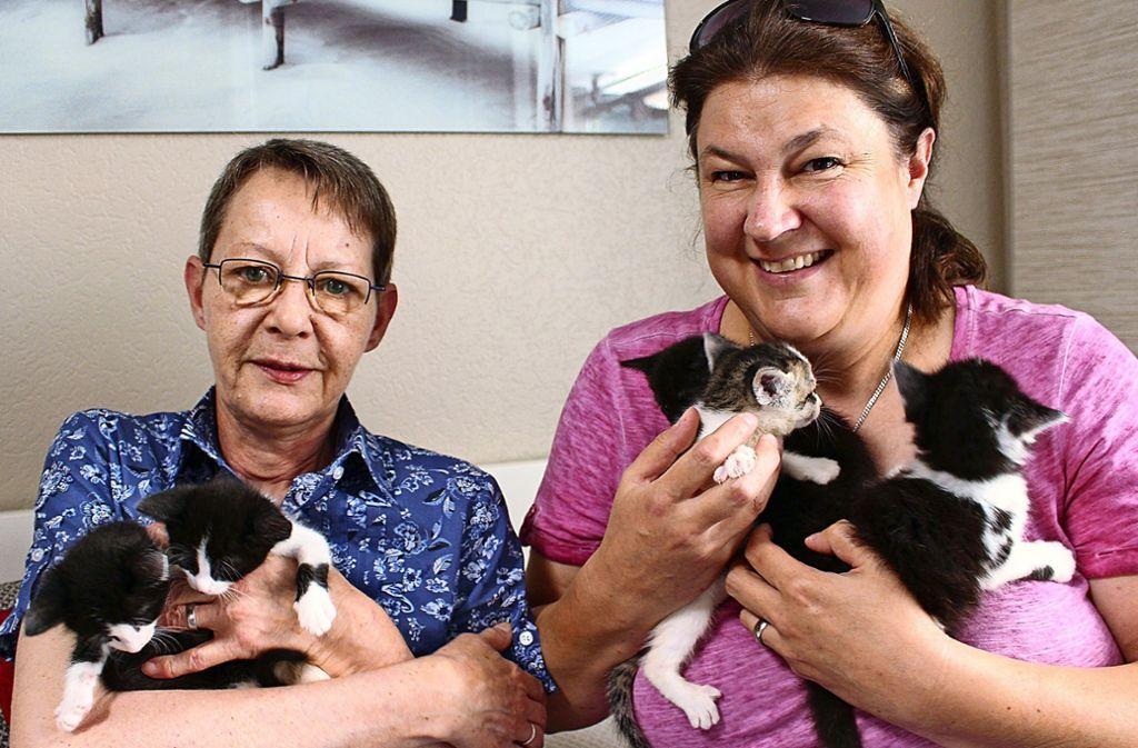 Bärbel Scheib-Wanner (links) und Isabell Thaidigsmann haben  mit den Babykatzen alle Hände voll zu tun Foto: Holowiecki