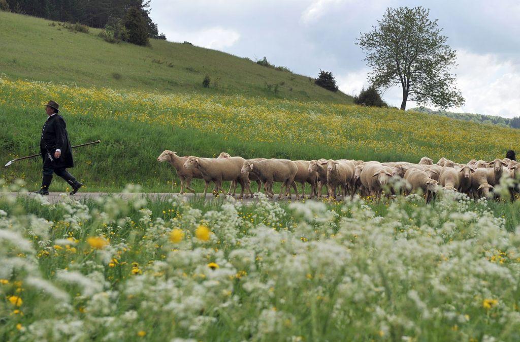 Landwirtschaft auf der Schwäbischen Alb ist schwierig. Foto: dpa