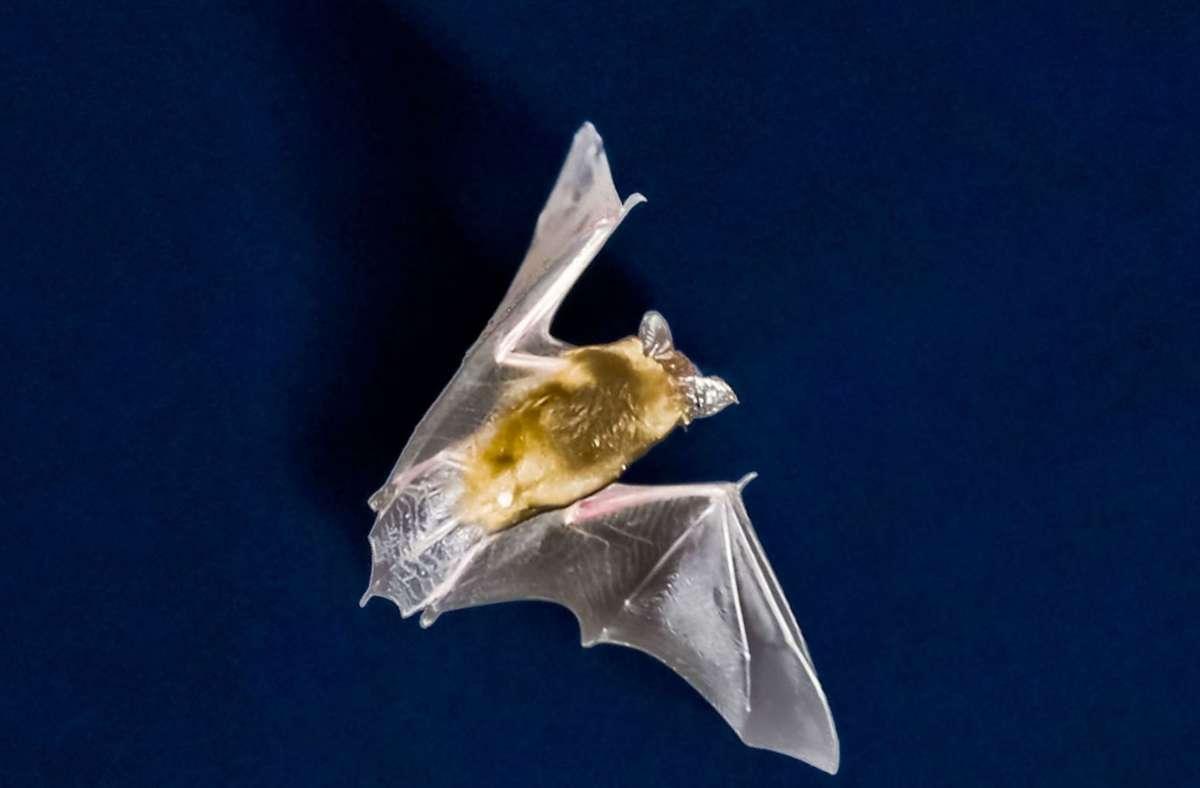 Naturschützer machen sich unter anderem Sorgen um seltene Fledermausarten. Foto: dpa/Frank Rumpenhorst