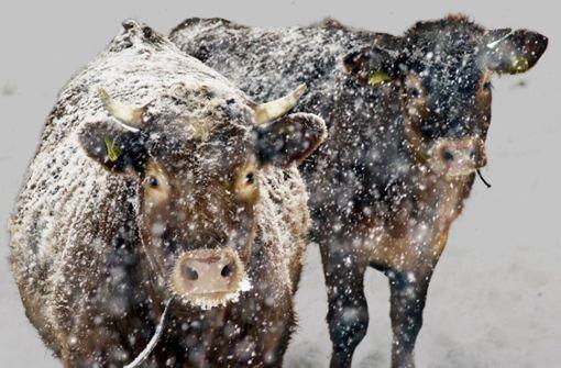 In der Tierhaltung fällt der Südwesten ab