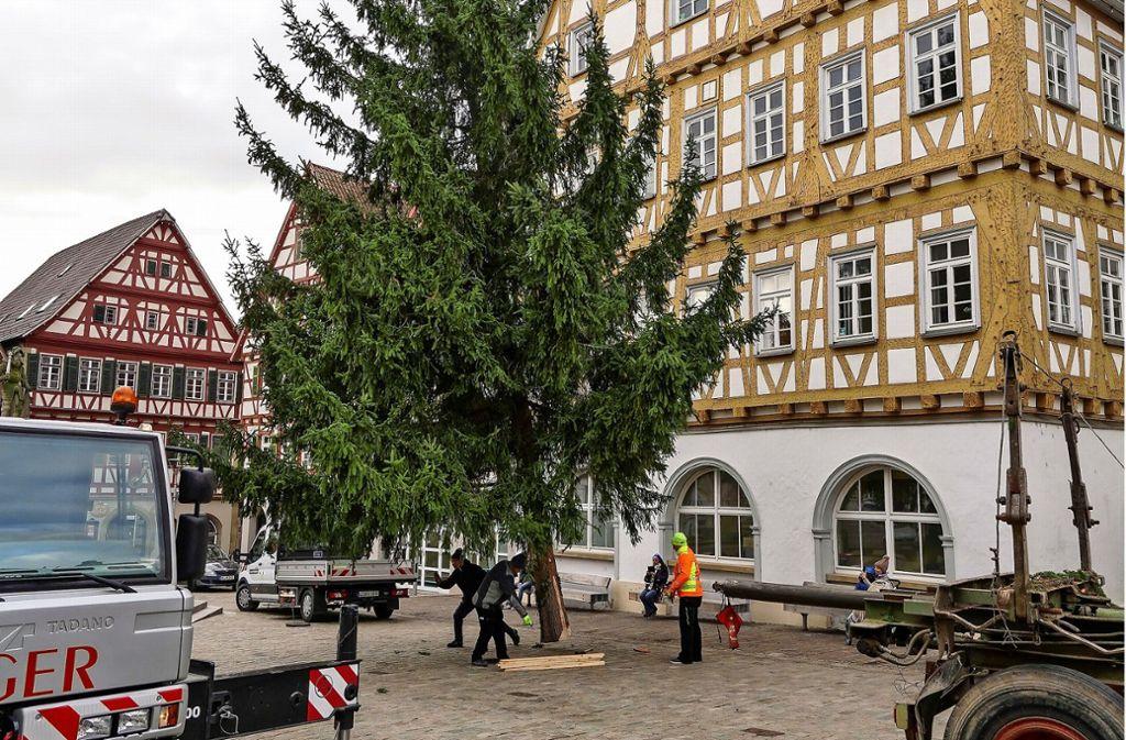Den Weihnachtsbaum richtig zu platzieren, ist  gekonnte Maßarbeit. Foto: factum/Jürgen Bach
