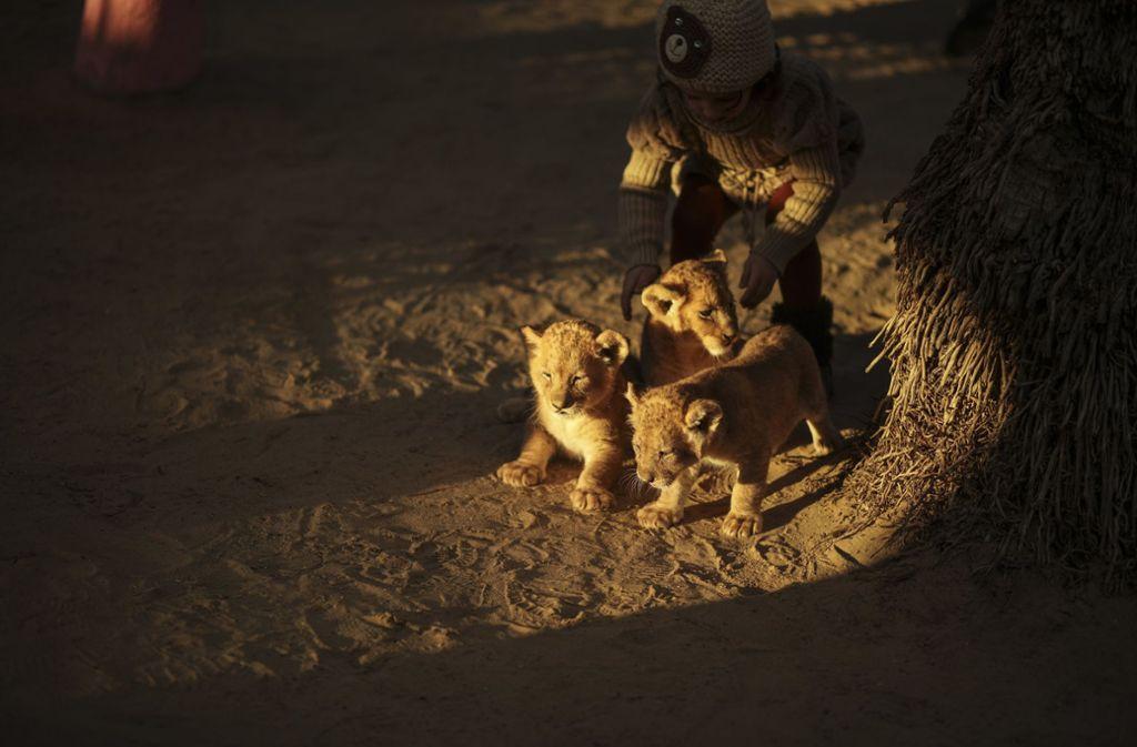Ein Mädchen spielt im Zoo in Rafah (Palästinensische Autonomiegebiete) mit Löwenbabies. Foto: Wissam Nassar/dpa