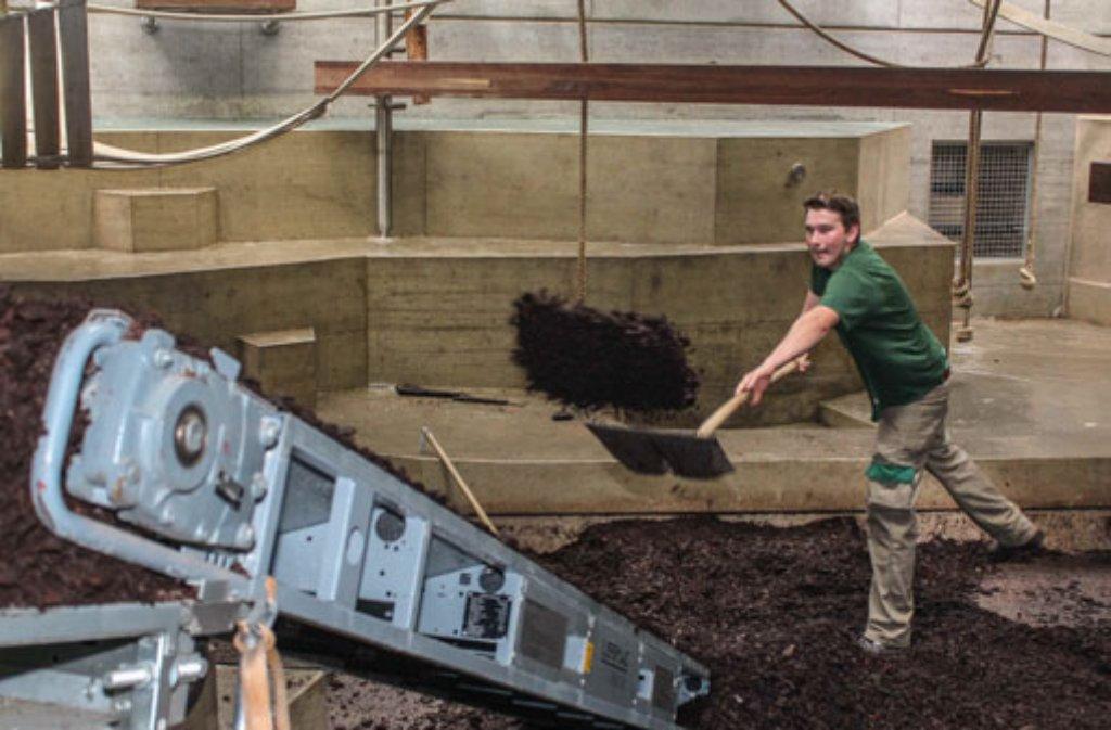 Für die Sanierung des Bodens im neuen Menschenaffenhaus muss erst einmal der Rindermulch abtransportiert werden. Die Gorillas sind derweil draußen untergebracht. Foto: Wilhelma Stuttgart