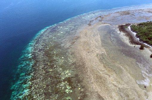 Dritte Korallenbleiche hat verheerende Folgen