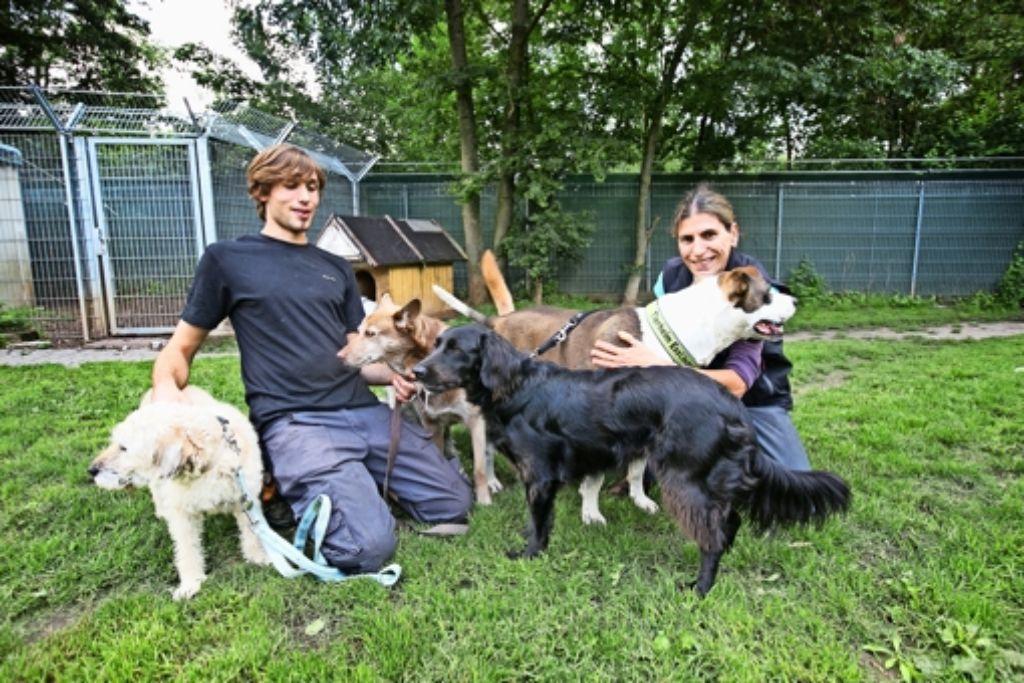 Um  die     fünf ausgesetzten Mischlingshunde  kümmern sich jetzt die  beiden Tierpfleger Moritz Rehme und  Annette von Arnim. Foto: Ines Rudel