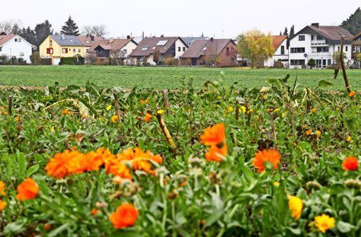 Neues Baugebiet im Süden der Gemeinde geplant
