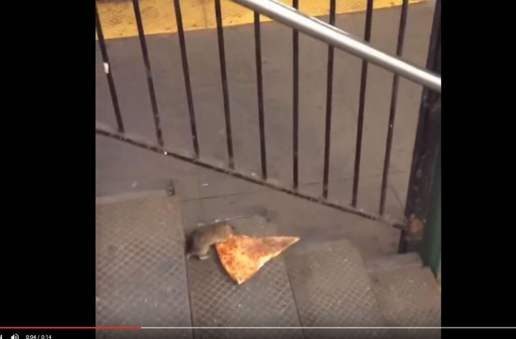 In dem kurzen Clip schleift eine Ratte ein Stück Pizza hinter sich her. Foto: Screenshot Youtube/Matt Little