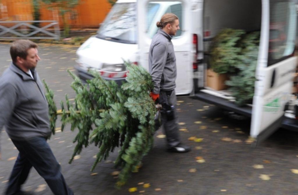 Ende November werden die ersten Weihnachtsbäume verkauft. Foto: dpa