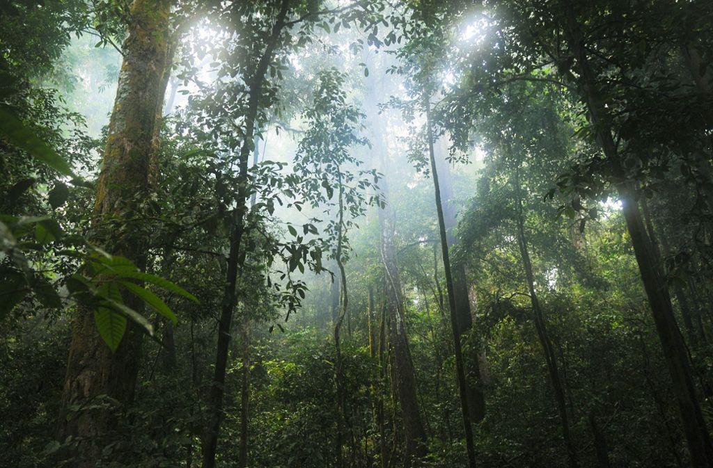 Nachhaltige Außenwirtschaftspolitik heißt auch Schutz des Regenwaldes. Foto: Pixabay