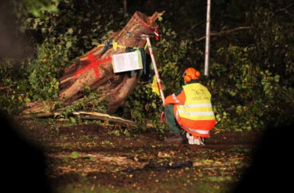 Das Stuttgarter Verwaltungsgericht will die Frage klären, ob die Baumfällarbeiten rechtens gewesen sind. Foto: dapd